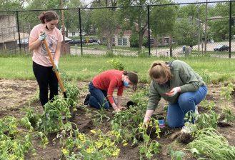 three students plant a pollinator garden